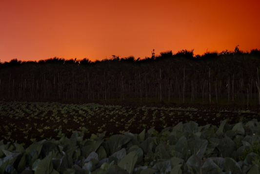 tramontocampo